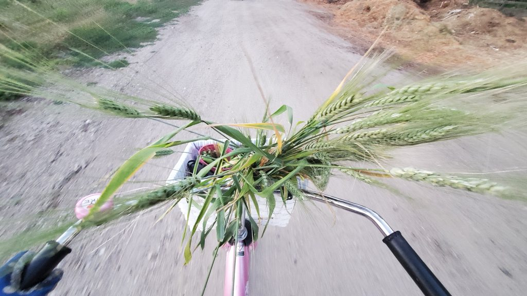Biking home with a harvest